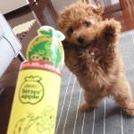 子犬の甘噛み防止に効果あり、ビターアップル
