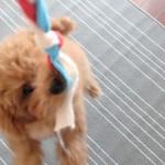 犬のひっぱりっこのおもちゃ作り方