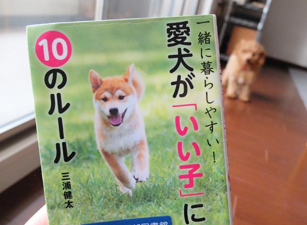 愛犬が「いい子」になる10のルール