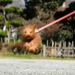 飛行犬写真