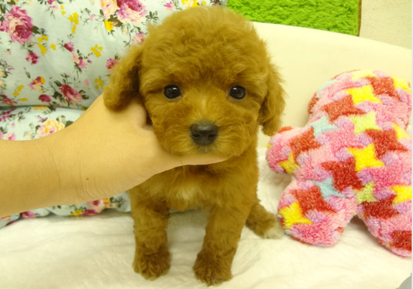 4182-puppy.jpg