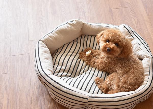 ラディカの犬用春夏ベッド