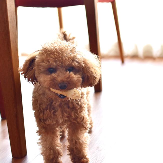 犬用歯磨きガム チューデント