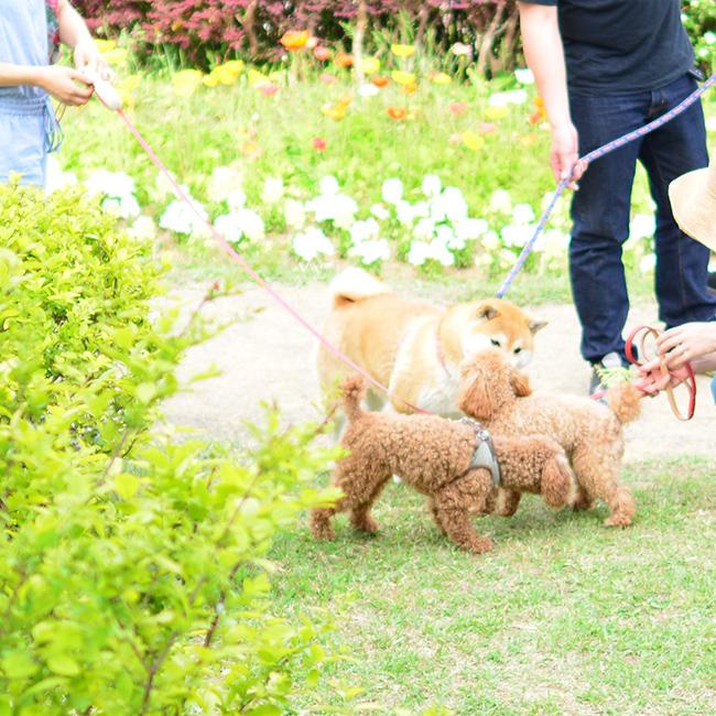 ここ日和「あわじ花さじき」犬とお出かけ