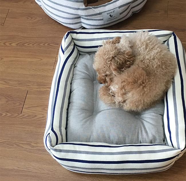 ここ日和 春夏トイプードル犬用ベッド