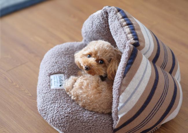 秋冬犬用ベッド ラディカシェルベッド