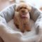 すっきりシンプル☆ラディカの秋冬犬ベッド